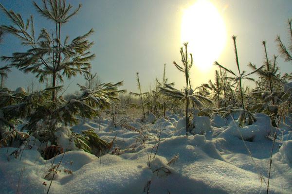 Winter Glow - WINTER