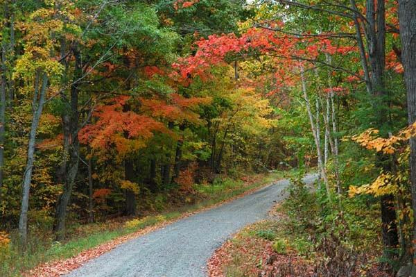 Cottage Road - AUTUMN COLOURS