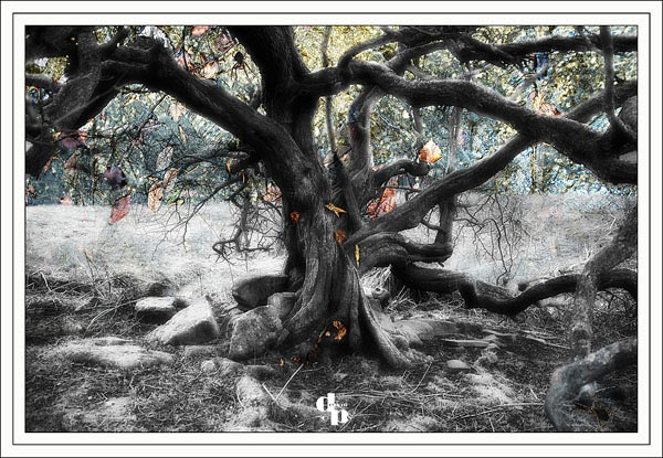 The Wychwood Tree - Digital Art
