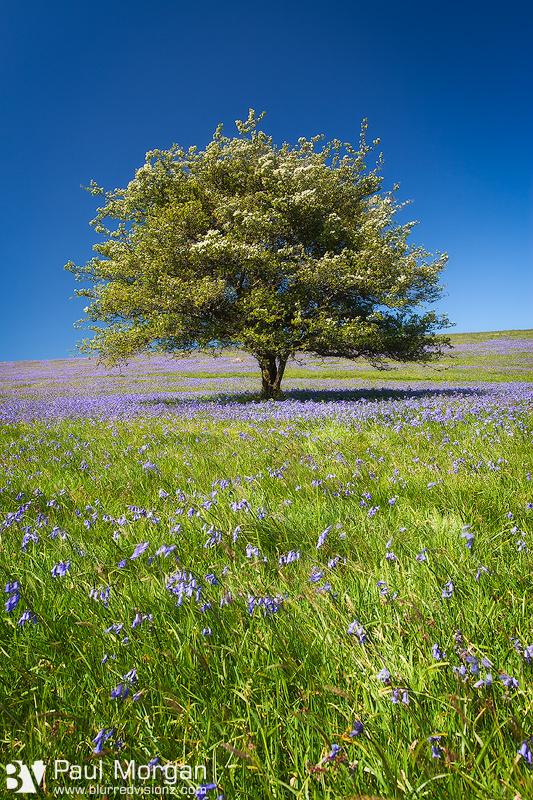Blue Is The Colour - Landscape (Vertical)