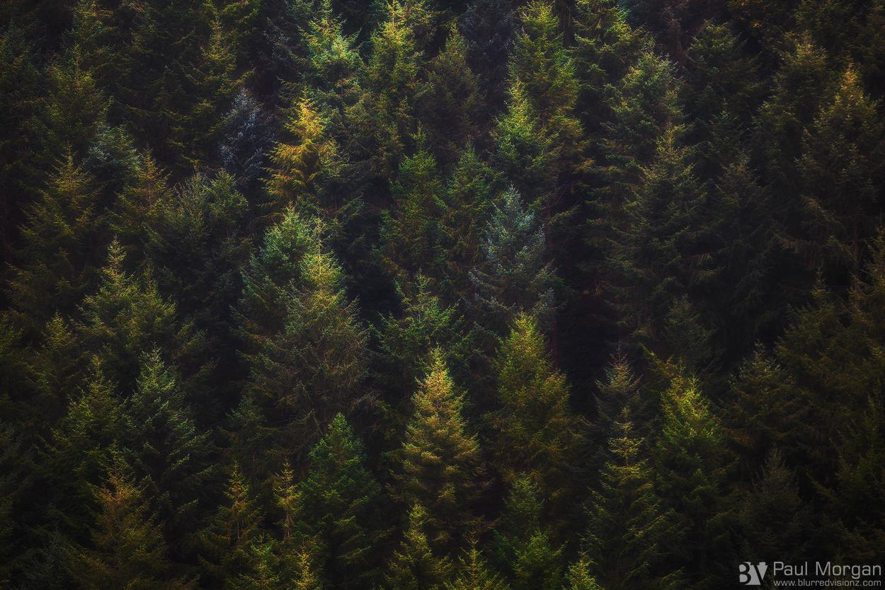 Wooden Palette - Landscape (Horizontal)