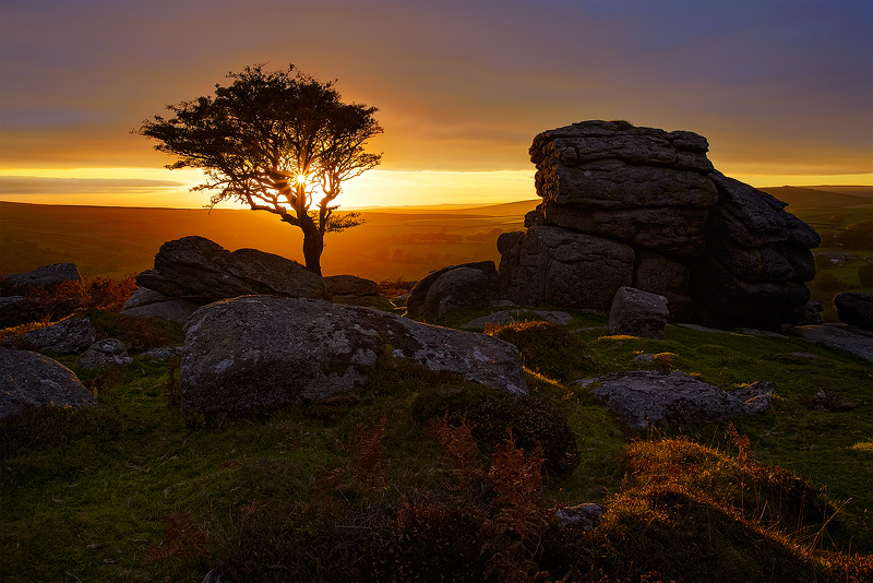 Dartmoor Gold - Landscape (Horizontal)