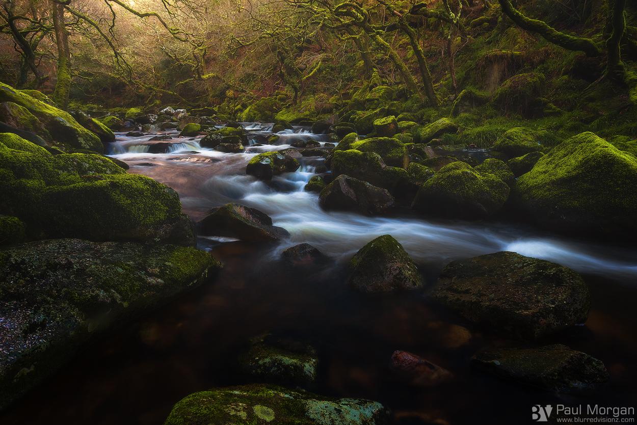 Enchanted - Landscape (Horizontal)