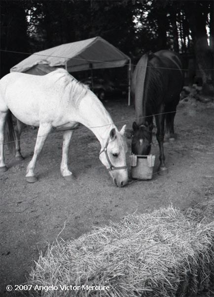 332 - Horses
