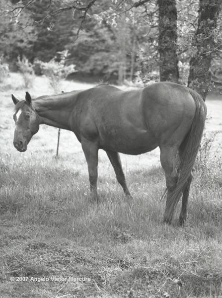 312 - Horses