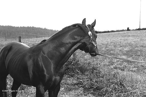 308 - Horses