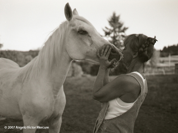 316 - Horses