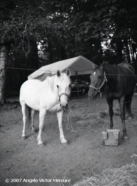 329 - Horses