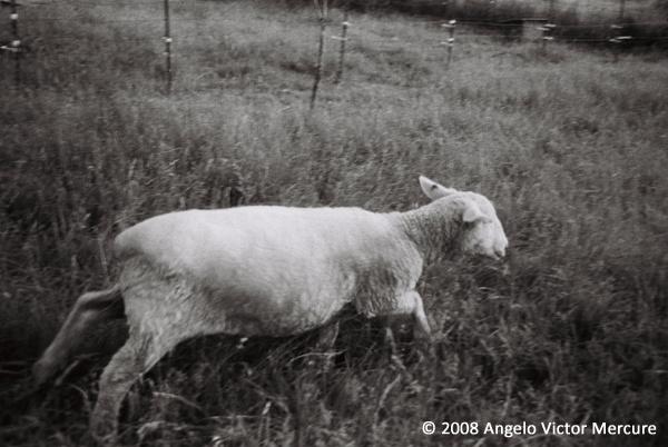 2605 - Farm Animals