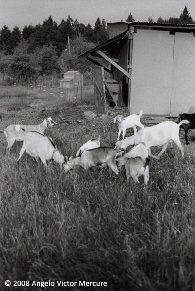 2603 - Farm Animals