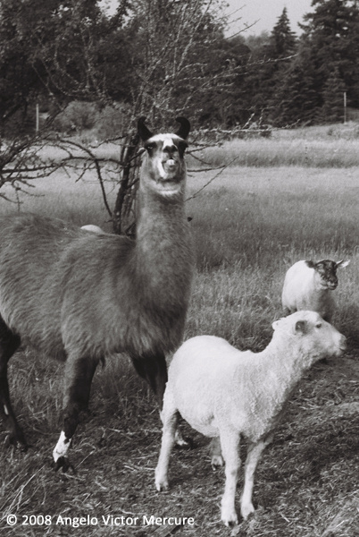 2608 - Farm Animals