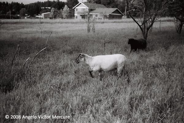 2604 - Farm Animals