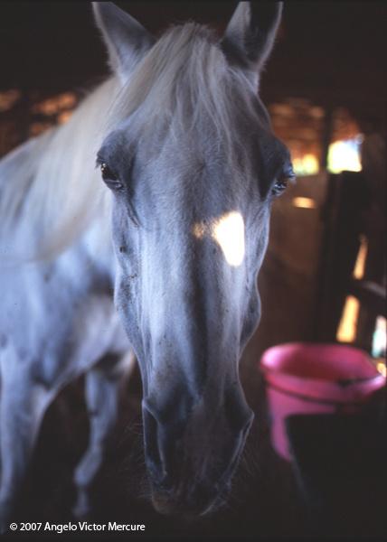 317 - Horses