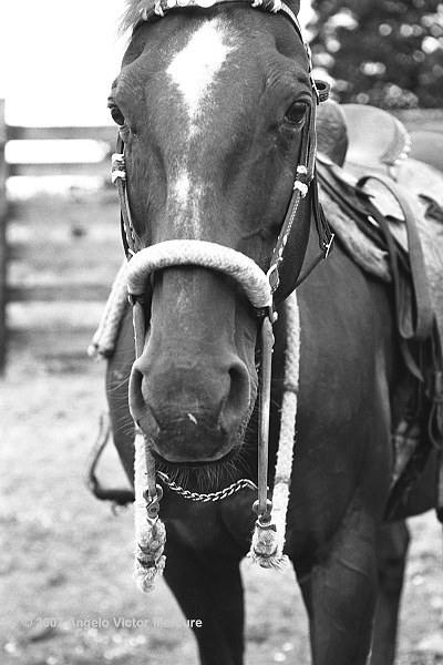 302 - Horses