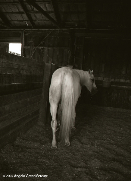323 - Horses