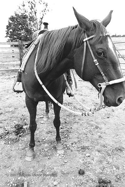 306 - Horses
