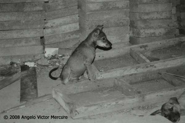 110 - Feral Dogs