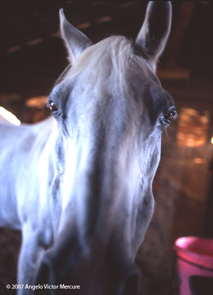 322 - Horses