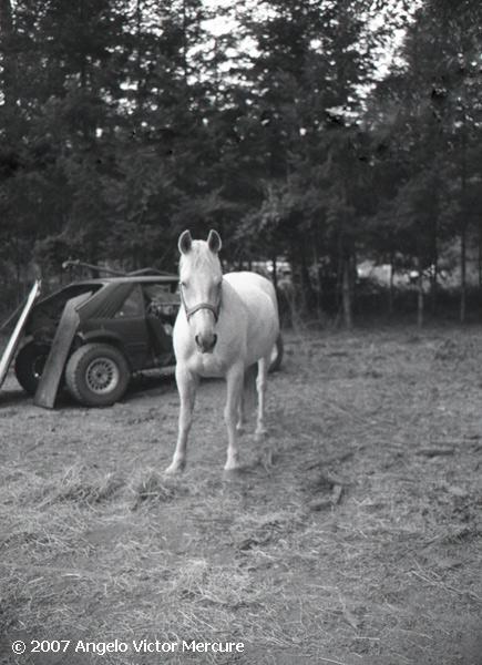 331 - Horses