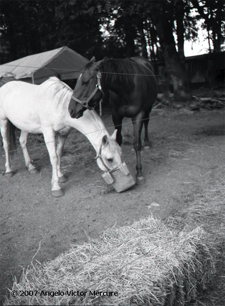 334 - Horses