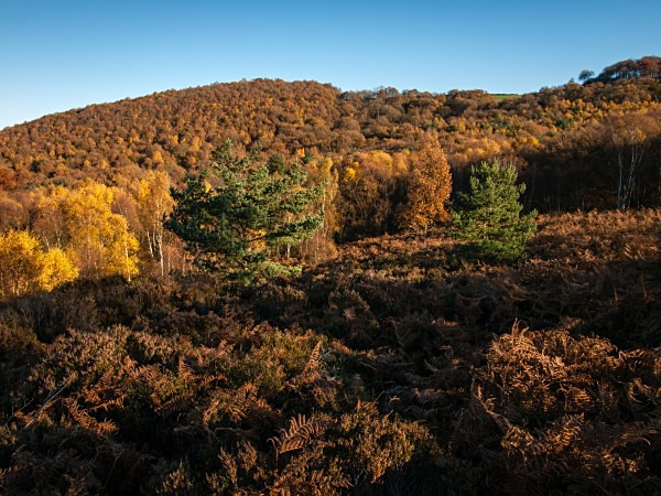 Wharncliffe Heath Nature Reserve, photographed by Roger Butterfield.