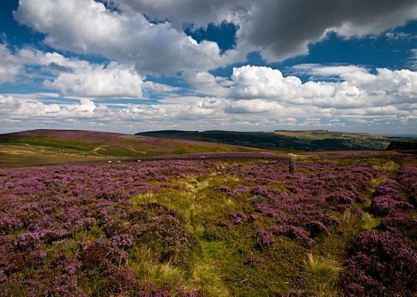 Bradfield Moors - Yorkshire