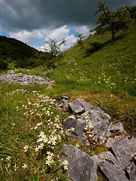 Deep Dale #04 - Deep Dale Nature Reserve