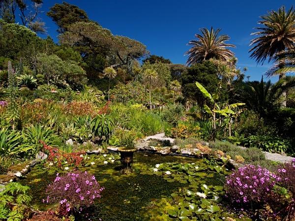 The Abbey Garden, Tresco #4 - Isles of Scilly