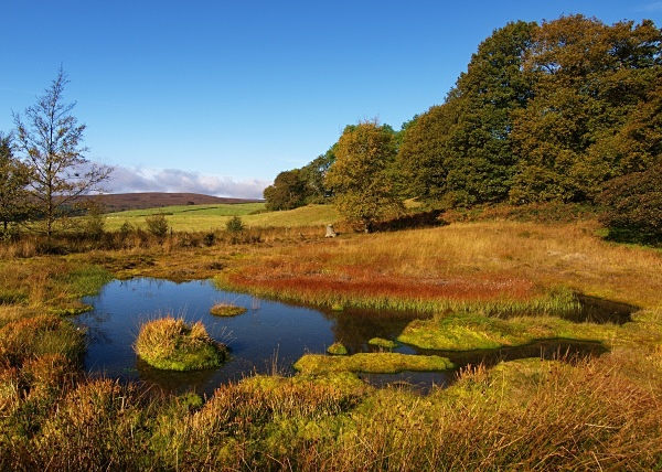 Rocher Bog (03) - Yorkshire