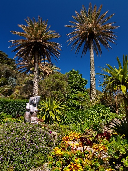 The Abbey Garden, Tresco #2 - Isles of Scilly