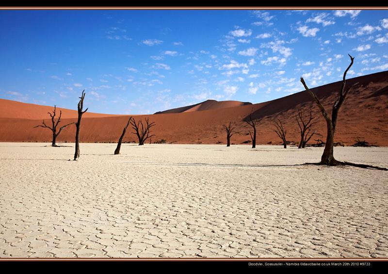 100320-Namibia-9733-DoodManyTree - Beyond the UK - Namibia