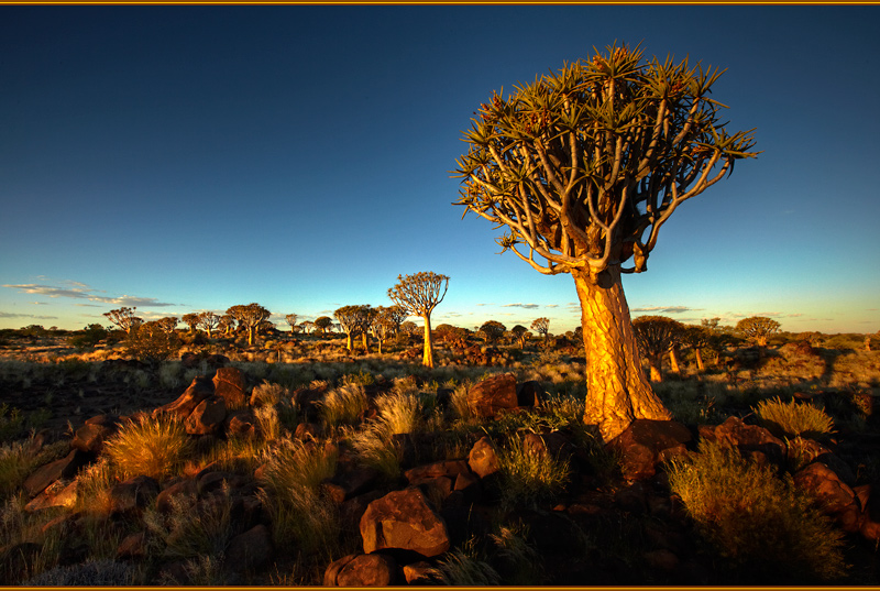 100313-Namibia-8884-Quiver2 - Beyond the UK - Namibia