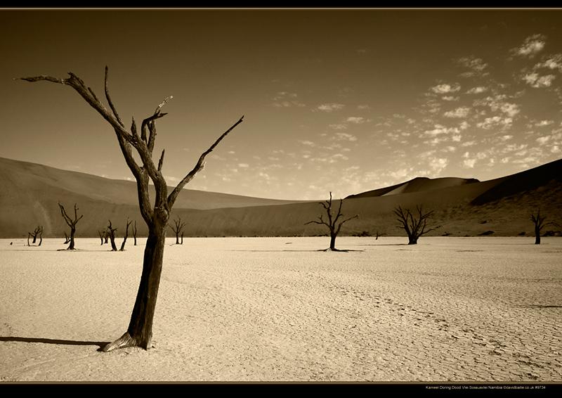 100320-Namibia-9734-DoodManyTree-Sep - Beyond the UK - Namibia