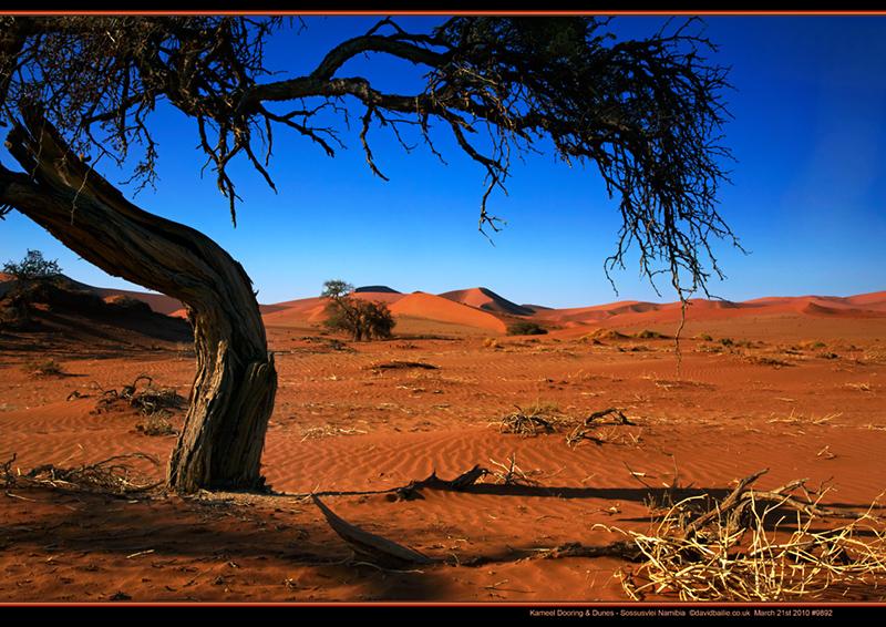 100321-Namibia-9892-Dunes - Beyond the UK - Namibia