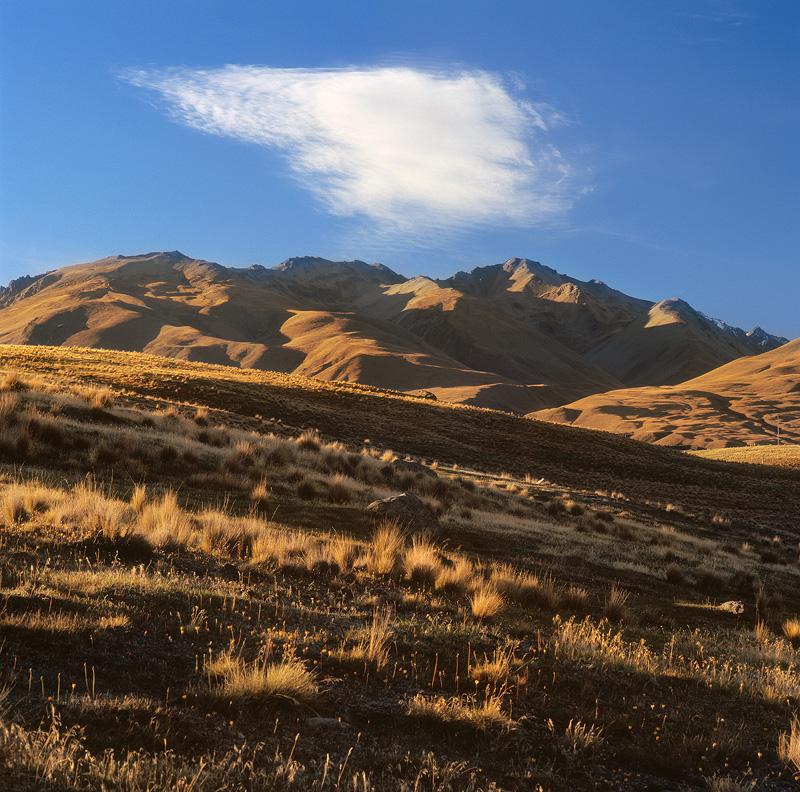 Afternoon Light - New Zealand