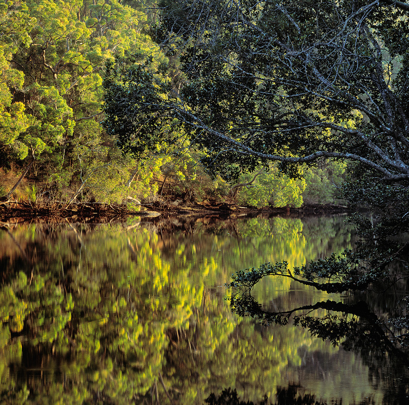 Mc Carrs Creek reflections - Landscapes
