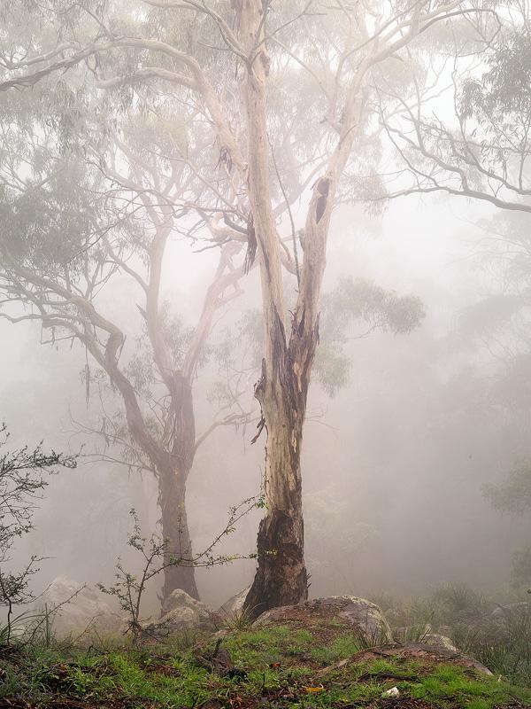 Ghost Gums - Landscapes