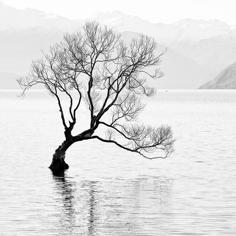 Boat, Duck, and Tree - Lake Wanaka - Black and White