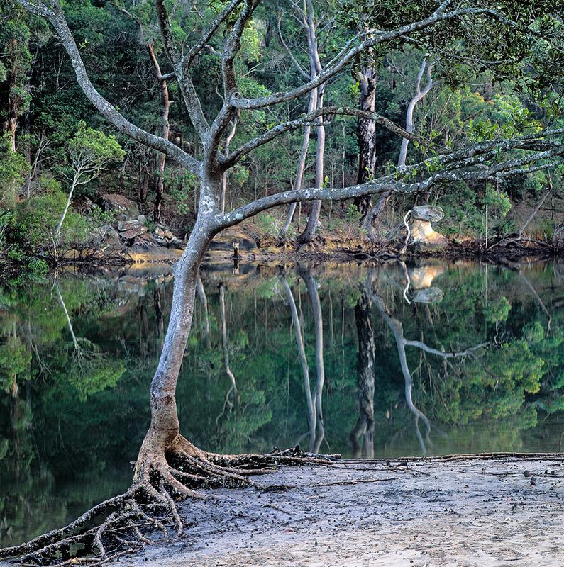 Mc Carrs Creek Mangrove - Landscapes