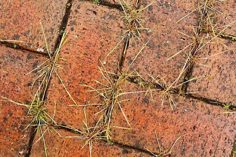Weeds - Close Up & Still Life