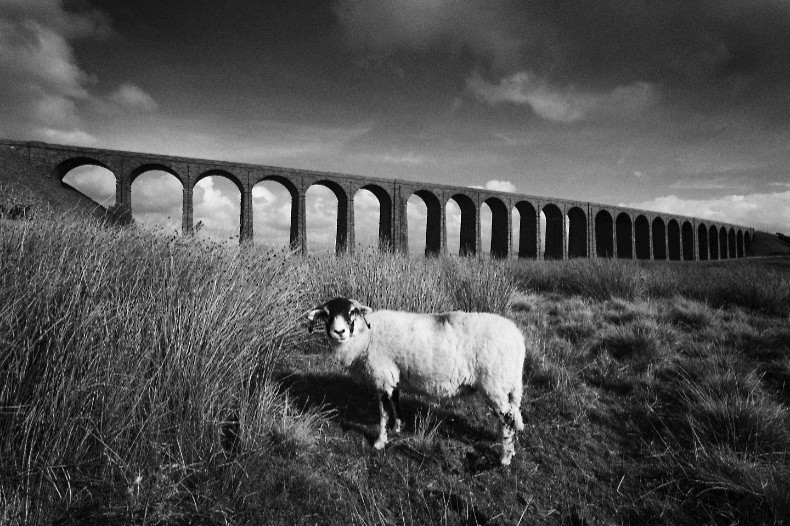 Ribblehead Viaduct 4 - Monochrome