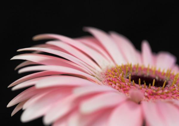 Pretty in Pink - Flora