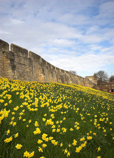 Bar Wall in Spring - York
