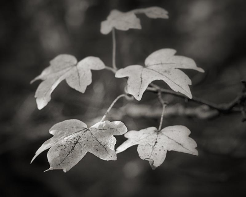 Autumn Leafs - Abstract & Still Life