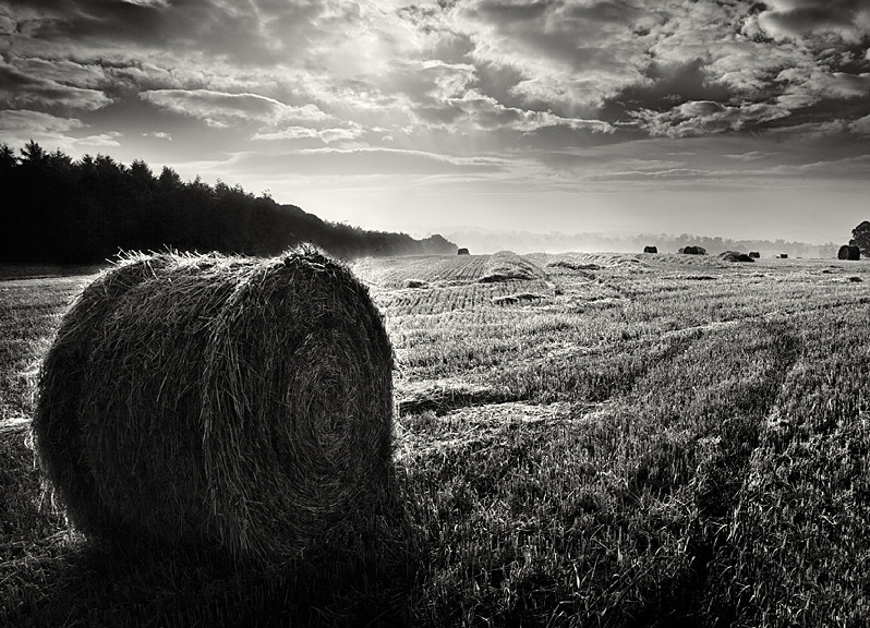 Hay Bails in Black and White