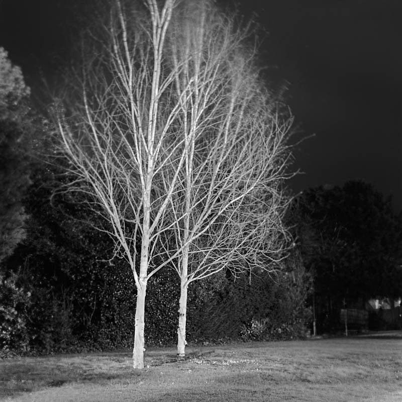 White Trees - Night Exposures