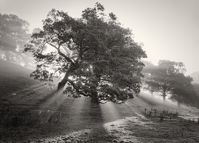 Black and White Film capture of Tree in Yorkshire