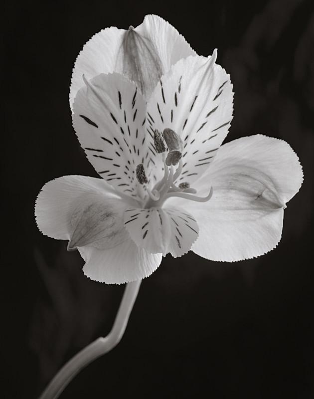 Flower Closeup - Abstract & Still Life