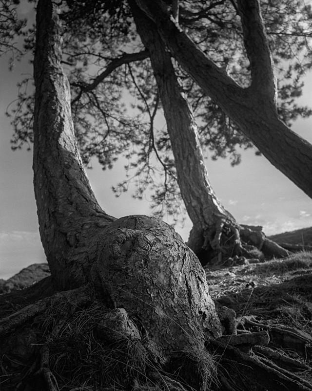 Ferns on Ilkley Moor - Landscapes