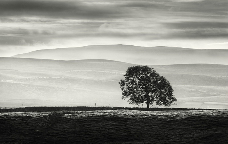 Yorkshire Trees in Landscape